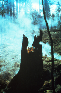 Burnt remains