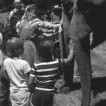 Children and elephants at India Faire